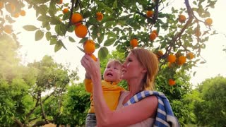 Young mom holding son in hands and harvesting fruit in orange grove. Fruit grove