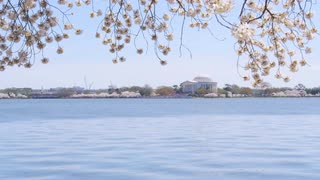 View across Potomac of Jefferson Memorial as tourists pass by during Cherry Blossom Festival in DC