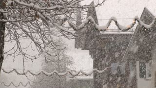 Village Tree In Snow Storm