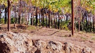 Vineyard Ground Level