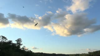 Vultures Soaring Against Beautiful Evening Sky