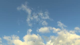 Vultures Soaring Against Bright Blue Sky