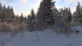 Walking Along Sunny Winter Forest