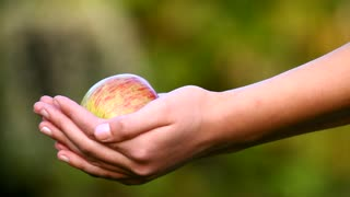 Washing an apple in the garden, human hands holding a fresh apple in autumn