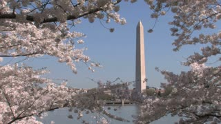 Washington Monument Behind Cherry Blossom Branches
