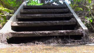Water Dripping From Overgrown Steps