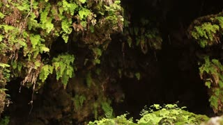 Water Dripping on Ferns at Ein Gedi Falls
