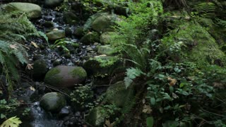 Water moving through rocks and plants