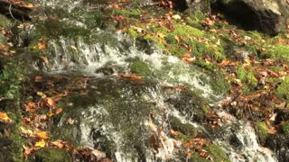 Water Rushing Over Moss