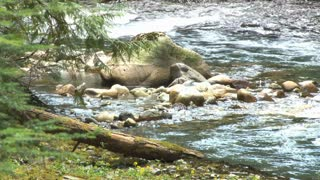 Water Rushing Over Rocky Creek Bed