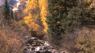 Water Through Aspen Woods