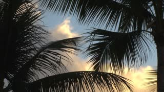 Waving Palm Tree Branches
