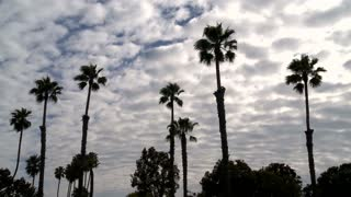 Wavy Clouds Over Palm Trees