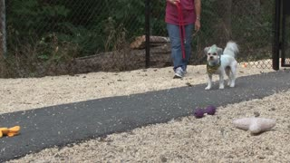 White Dog Playing in Playpen Outside Animal Shelter