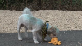 White Puppy Playing With Garfield Toy at Animal Shelter