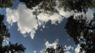Wide Angle Clouds Passing Treetops Timelapse