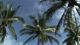 Wide Angle Lens View of Palm Trees and Blue Sky 2