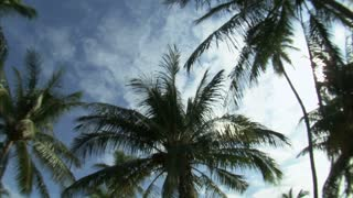Wide Angle Lens View of Palm Trees and Blue Sky 3