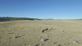 Wild horses run across desert plains 2