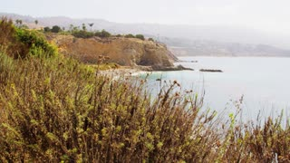 Wildlife Coastline