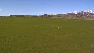 Wildlife Running Across Green Landscape
