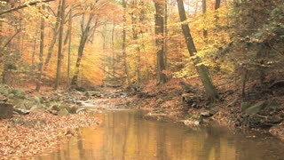 Winding Creek Through Autumn Woods 3
