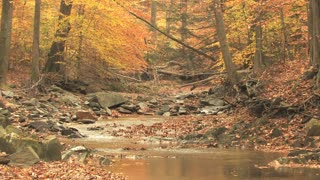 Winding Creek Through Autumn Woods