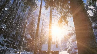 winter forest. snow falling slow motion. magic hour sunset