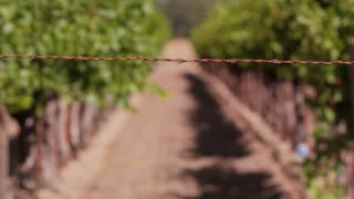 Wire Fence Across Vineyard Path
