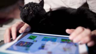 Woman browsing on touchpad with black cat on laps