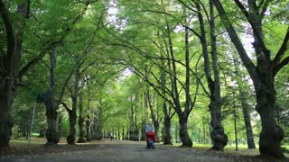 Woman or child carer taking her child for a walk in woodland pushing the pushchair down a tree lined avenue
