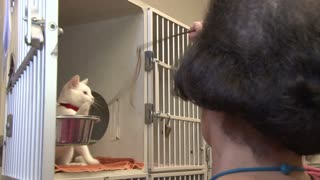 Woman Playing With White Cat