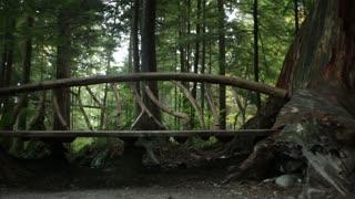 Wood bridge between two trees 1