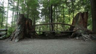 Wood bridge between two trees 2