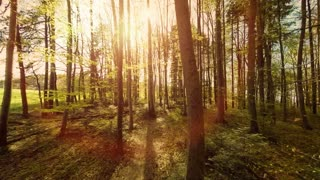 woods. trees. plants nature background. summertime. aerial view. forest trees