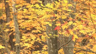 Yellow And Red Leaves On Tree