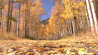 Yellow Autumn Woods from the Ground