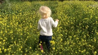 Young girl walking away from camera in flower meadow