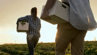 Young happy farming couple carrying basket full of produce on their farm at sunset
