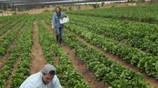 Young happy farming couple harvesting the lettuce produce on their farm