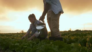Young happy farming couple watering lettuce produce on their farm with sun rays.