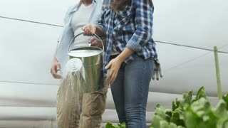 Young happy farming couple watering there lettuce produce on there farm.