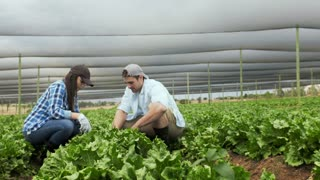 Young happy farming couple working with tools on there lettuce farm.
