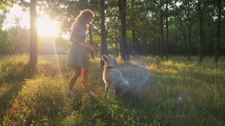 Young woman playing with retriever dog in park during sunset, slow motion