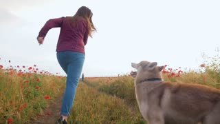 Young woman playing with siberian husky dog in poppy field