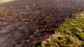 Aerial View. Flight Over Field After Fire