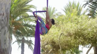 Agile athletic young acrobatic dancer hanging gracefully midair from two purple silk ribbons suspended from a tree in a tropical park