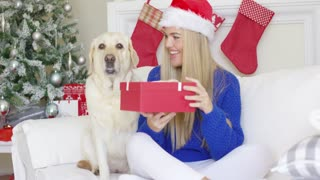 Beautiful sexy girl sitting at christmas time on sofa with her labrador best friend. She holding boxed holiday gift and having fun.