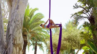 Graceful female acrobatic dancer hanging suspended from two purple silk ribbons from a tropical palm tree