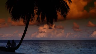 Romantic couple sitting next to palm tree at sunset
